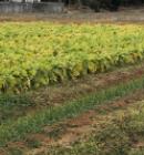 重な農業体験~アプリ桑名中央~